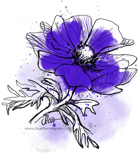 muellerwegner-anemone